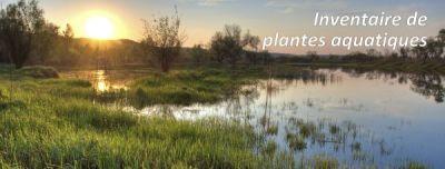 Inventaire de plantes aquatiques --- Lac Nicolet --- Été 2017